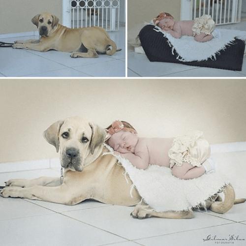 фотосет newborn на собаке